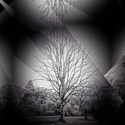 Photograph - Tree Line by Mark Taylor