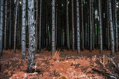Photograph - Tree Line by Michael Arend