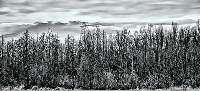 Photograph - Tree Line Panorama by Suzanne Stout