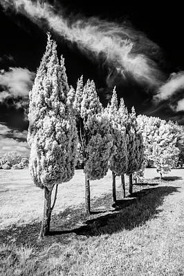 Photograph - Tree Line-up by Roseanne Jones