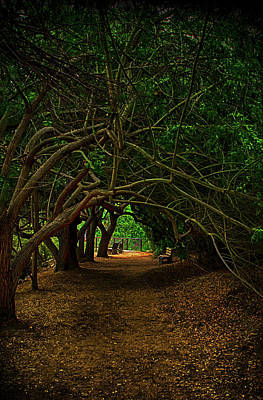 Photograph - Tree Lined Archway by Joseph Hollingsworth