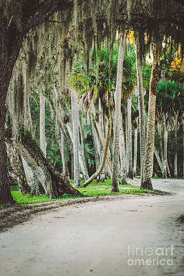 Fort Pierce Photograph - Tree Lined Dirt Road In Vintage by Liesl Marelli