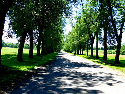 Photograph - Tree Lined Drive by Catherine Gagne