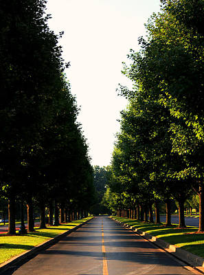 Christina Conway Royalty-Free and Rights-Managed Images - Tree Lined Drive by Christina Conway