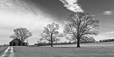 Photograph - Tree Lined Drive by Ron Dubin