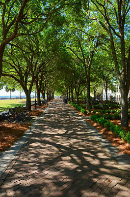 Tree Lined Path Art Print