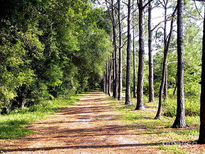 Photograph - Tree Lined Path by Terri Mills