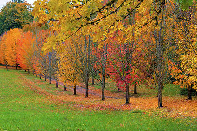 Photograph - Tree Lined Path With Fall Foliage by Jit Lim