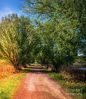 Photograph - Tree Lined Road Tolay Ranch Sonoma County by Blake Webster