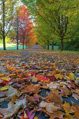 Photograph - Tree Lined Street During Fall Season by David Gn
