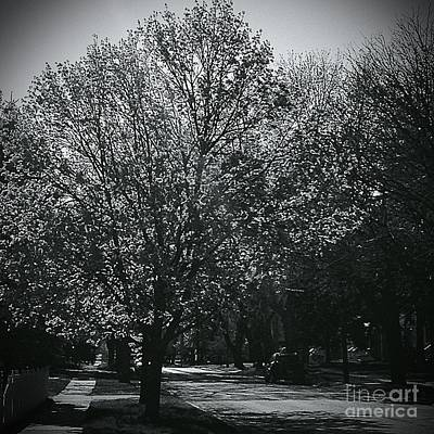 Frank J Casella Royalty-Free and Rights-Managed Images - Tree Lined Street  by Frank J Casella