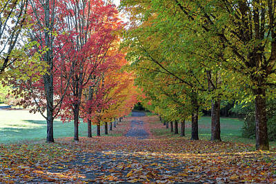 Photograph - Tree Lined Street In Fall Color by David Gn