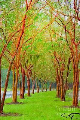 Photograph - Tree Lined Walk by Paul Wilford