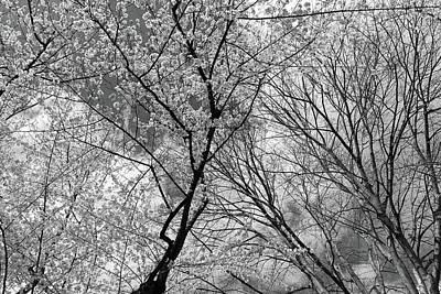 Photograph - Tree Lines And More -- 2 by Cora Wandel