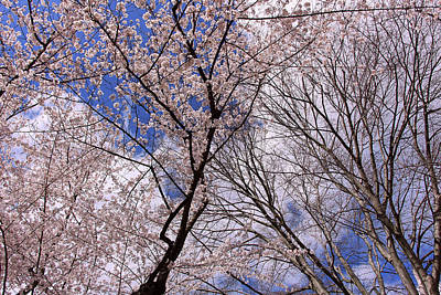 Photograph - Tree Lines And More by Cora Wandel