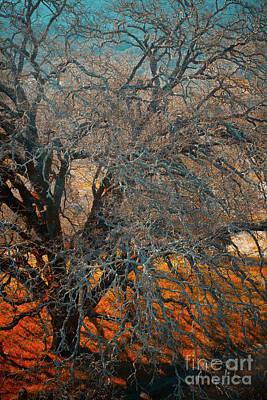 Photograph - Tree Lll by Derek Selander