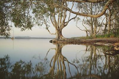 Photograph - Tree Love Down By The Lake by Keiran Lusk