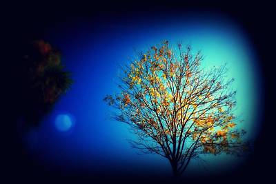 Photograph - Tree by Mandy Shupp