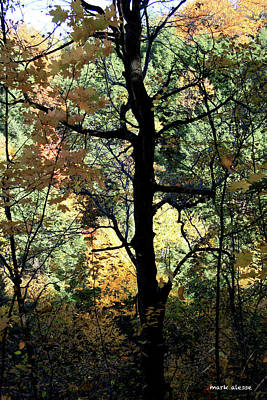 Photograph - Tree  by Mark Alesse