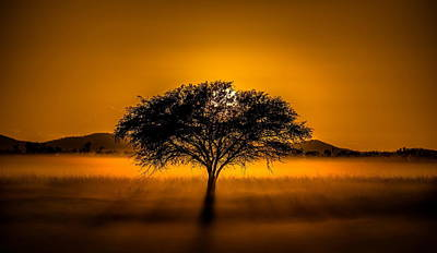 Sunset Digital Art - Tree by Maye Loeser