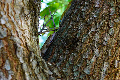 Photograph - Tree Meeting by Tikvah's Hope