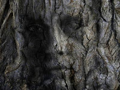 Tree Memories # 14 Art Print by Ed Hall