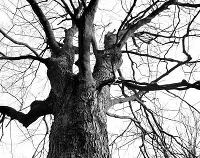 Photograph - Tree by Monica Whaley