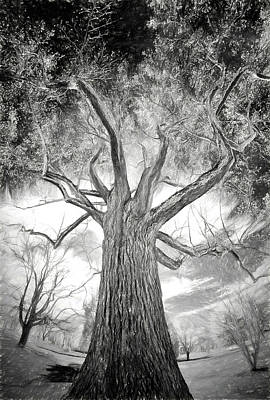 Painting - Tree Monster Bw Ap by Dan Carmichael