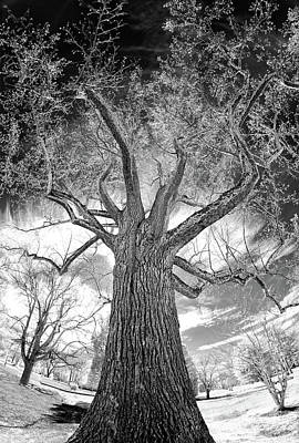 Photograph - Tree Monster Bw by Dan Carmichael