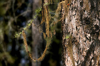 Photograph - Tree Moss - Green Soft Beauty by Christine Till