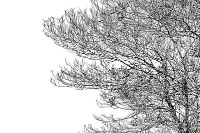 Photograph - Tree No. 7-2 by Sandy Taylor