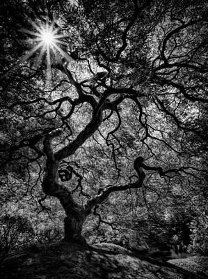 Tree Noir Art Print