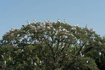 Photograph - Tree Of Bird Life by Paul Rebmann