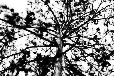 Photograph - Tree Of Fae by Gina O'Brien