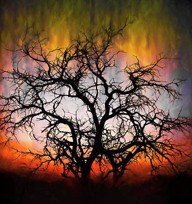 Photograph - Tree Of Fire by Christopher Wieck