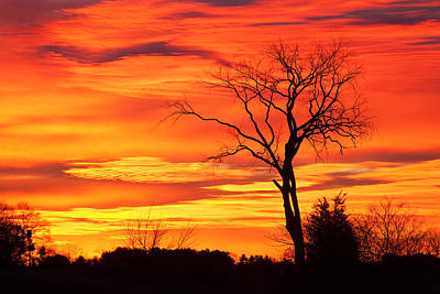 Tree Of Fire Art Print by Eric Gendron