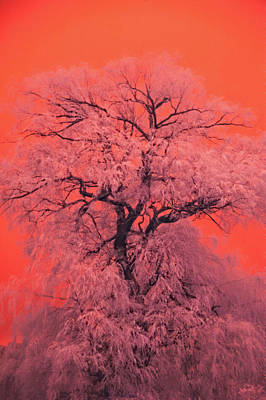 Photograph - Tree Of Happiness by Emily Stauring