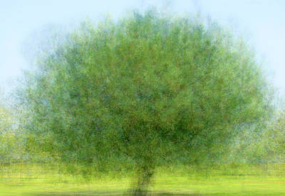 Impressionist Photograph - Tree Of Joy by Joseph S Giacalone