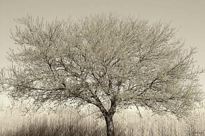 Photograph - Tree Of Life 1 by Joseph Hedaya