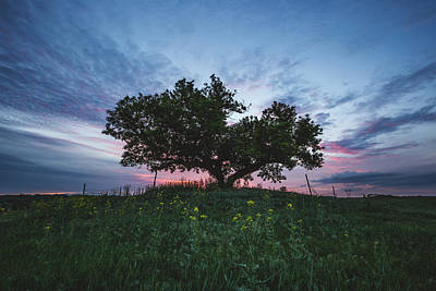 Photograph - Tree Of Life  by Aaron J Groen