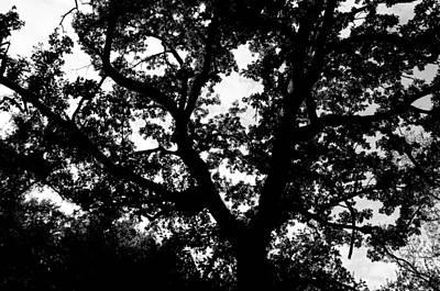 Photograph - Tree Of Life by Andrea Mazzocchetti