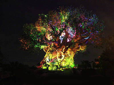 Photograph - Tree Of Life Awakenings by C H Apperson