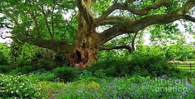 Photograph - Tree Of Life by Christian Slanec