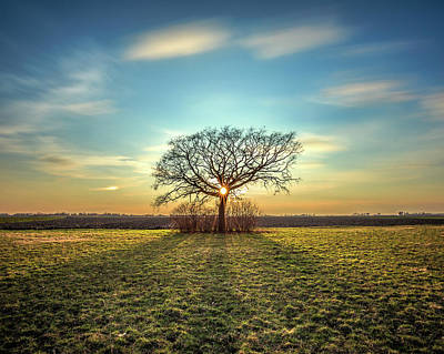 Photograph - Tree Of Life by Davorin Mance
