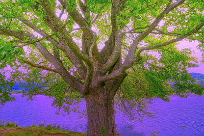 Photograph - Tree Of Life by Dennis Baswell