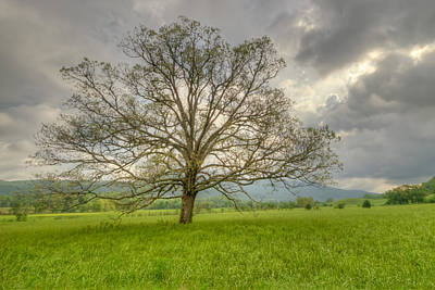 Photograph - Tree Of Life by Doug McPherson