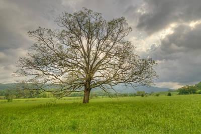 Photograph - Tree Of Life by Doug McPherson