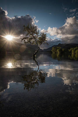 Photograph - Lynn Padarn Lone Tree by Mark Boadey