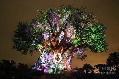 Photograph - Tree Of Life Rainbow by Erick Schmidt