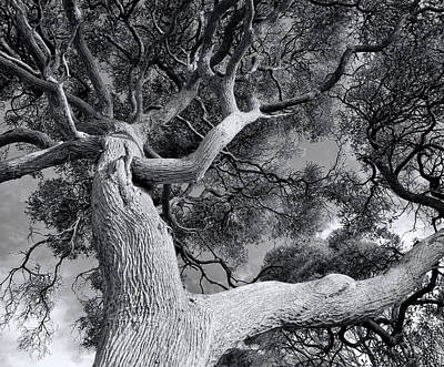Photograph - Tree Of Life by Wayne Sherriff